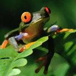 Sapos y ranas en tus sueños, buen presagio