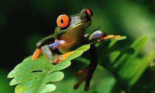 Sapos y ranas en sueños