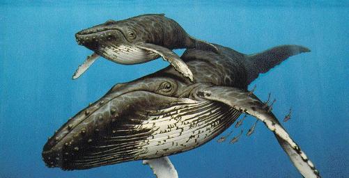 Ballenas en nuestros sueños
