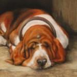 Soñar con perros, intuyendo intenciones