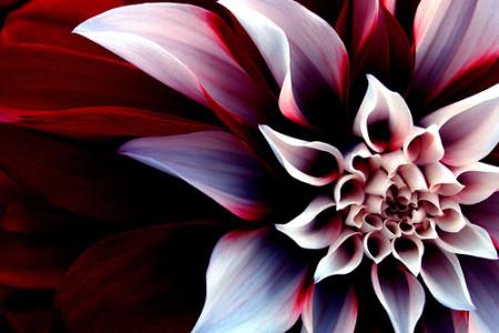 Flores en sueños, los colores de la alegría