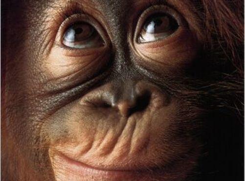 Mono, signo brillante y apasionado