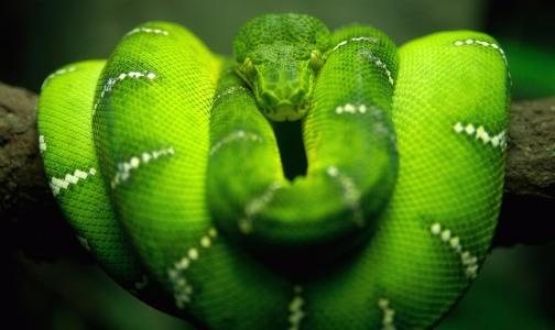 Serpiente, signo inteligente y generoso