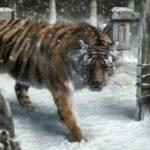 Tigre en el horóscopo chino, rebelde y temerario