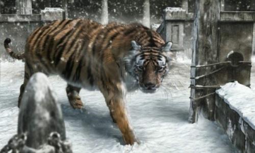 Tigre bello