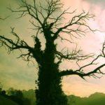 Horóscopo celta, 21 árboles mágicos