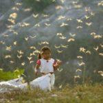 Soñar con bichos o insectos, ten cuidado