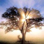 Guías espirituales, valiosa compañía