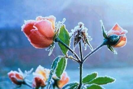 La magia de las flores, sus poderes ocultos