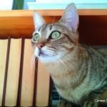 Gatos, protección ante lo negativo