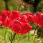 Las flores y la magia de sus colores