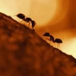 Hormigas en sueños, ¿qué significa?